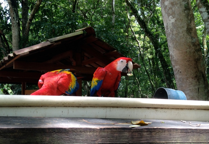 Macaws!